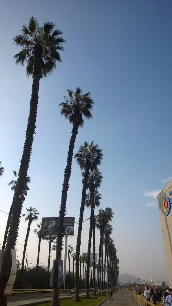 Sommaren är verkligen på väg. Vad är somrigare än palmer mot en blå himmel?